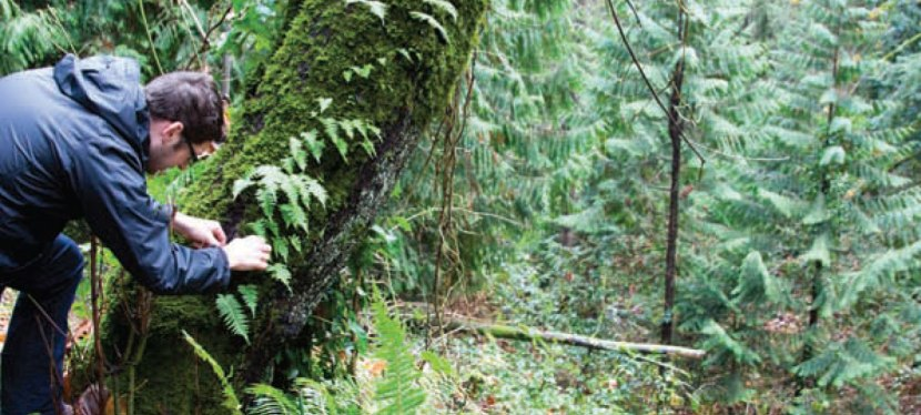 Castagna: Portland, Oregon | MatthewLightner