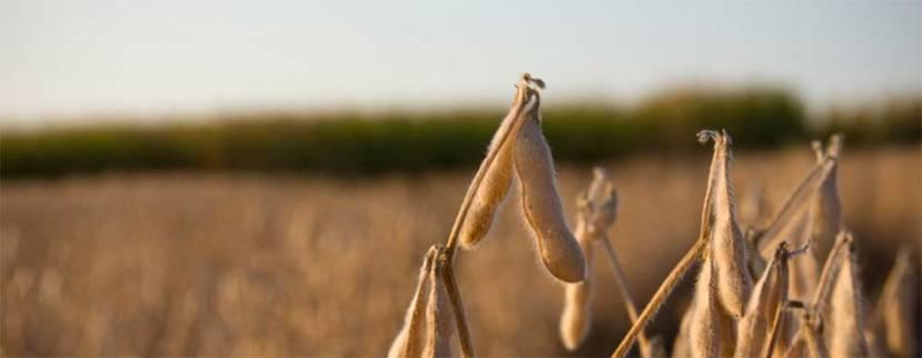 Crop Futures: How Surplus Breeds Demand | JamesBarnett